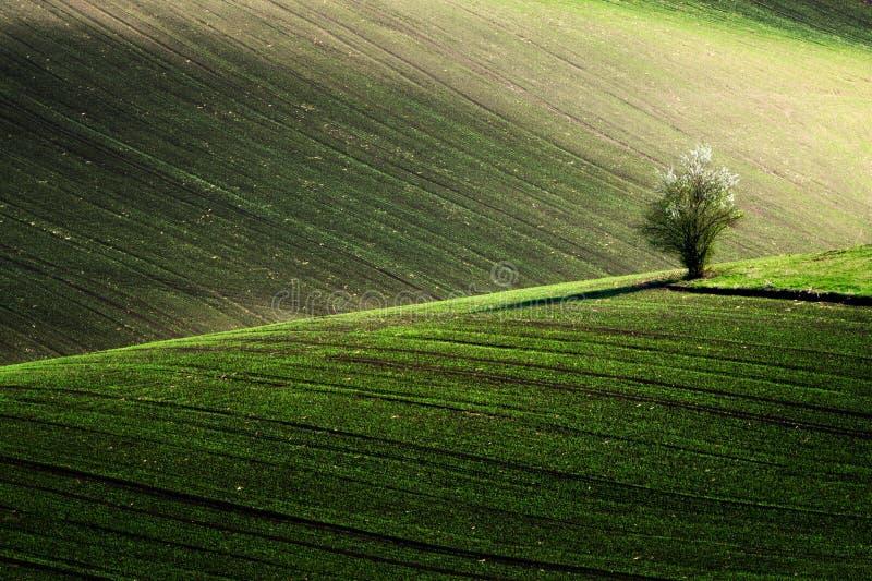 Detalle el paisaje en el campo del sur de Moravian durante la primavera, República Checa imagen de archivo