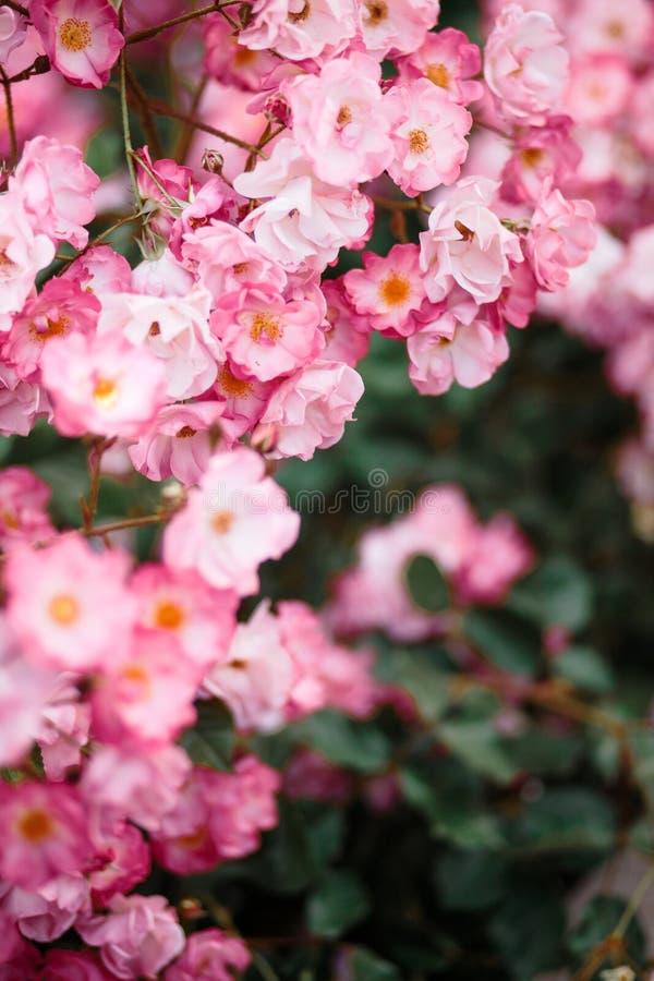 Detalle hermoso de las flores perfumadas del jardín botánico imagenes de archivo