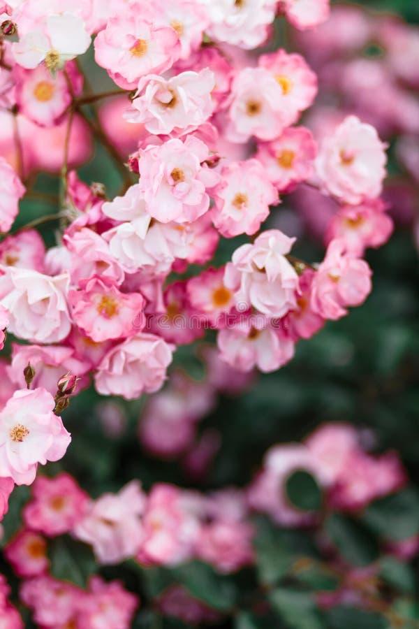 Detalle hermoso de las flores perfumadas del jardín botánico foto de archivo