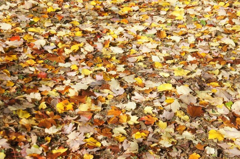 Detalle, hojas de otoño en el piso del bosque foto de archivo