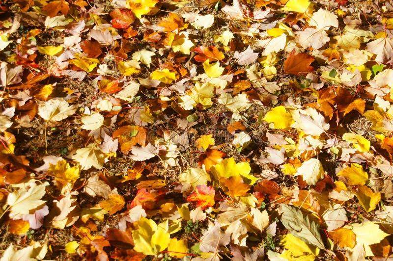 Detalle, hojas de otoño en el piso del bosque fotografía de archivo libre de regalías