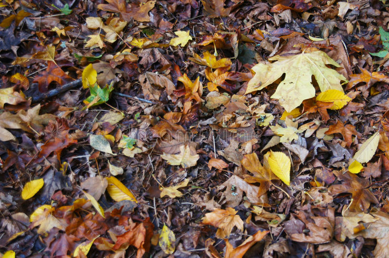 Detalle, hojas de otoño en el suelo del bosque fotografía de archivo libre de regalías