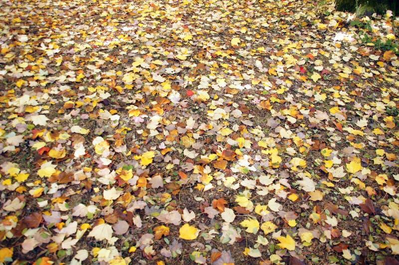 Detalle, hojas de otoño en el suelo del bosque imagen de archivo libre de regalías