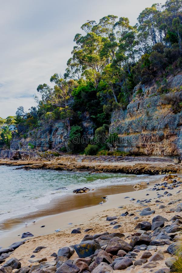Detalle la vista de la playa tasmana con las rocas y los árboles del arbusto fotos de archivo