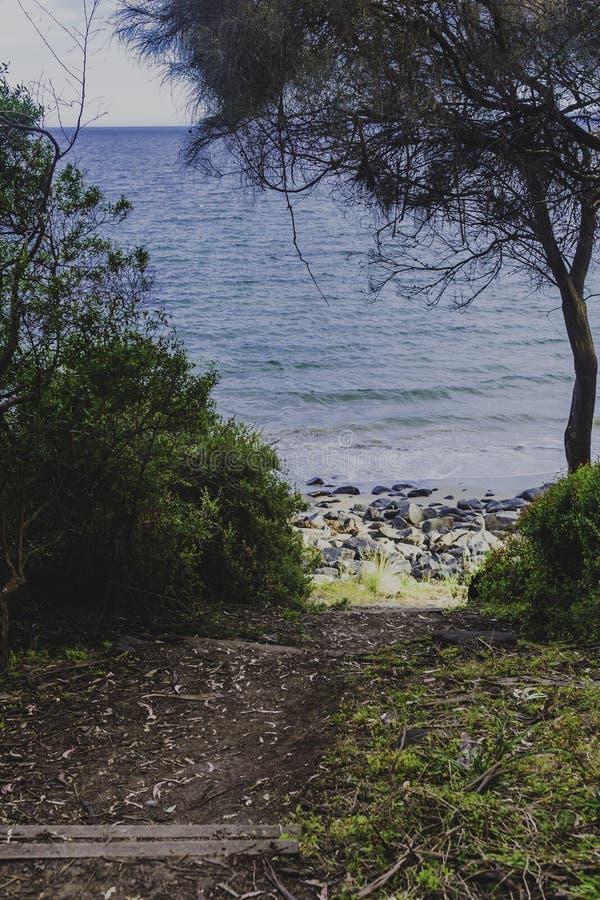 Detalle la vista de la playa tasmana con las rocas y los árboles del arbusto imagenes de archivo