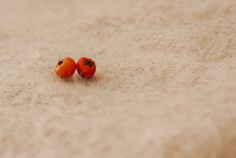Detalle macro de dos pequeños tomates anaranjados fotos de archivo libres de regalías