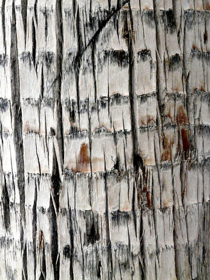 Detalle macro de la corteza de un árbol imágenes de archivo libres de regalías