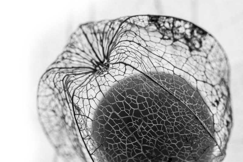 Detalle macro de la planta - textura floral foto de archivo libre de regalías