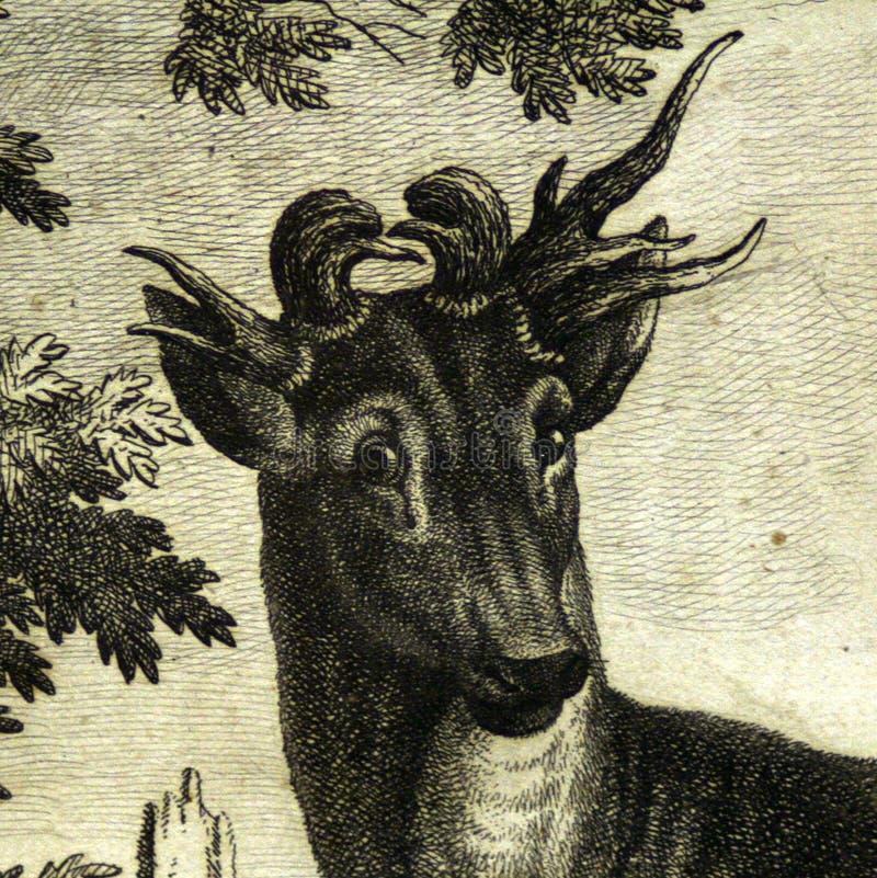 Detalle que graba al agua fuerte principal de los ciervos de las antigüedades fotografía de archivo libre de regalías