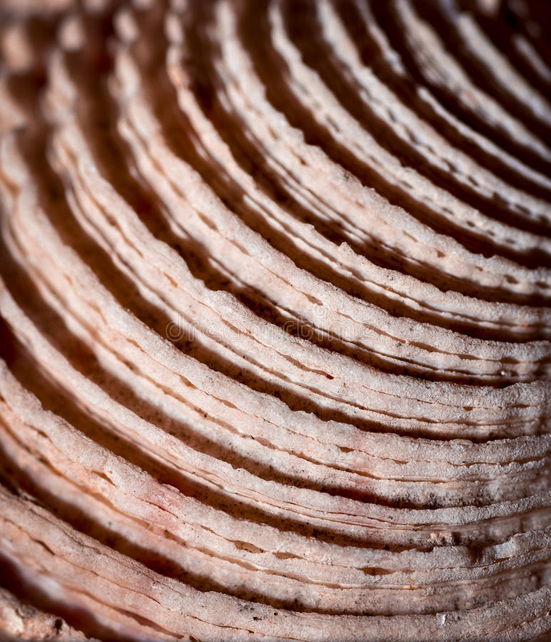 Detalle semicircular de las cáscaras del mar fotografía de archivo