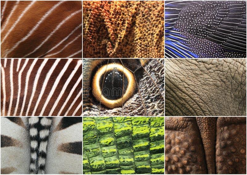 Detalles animales imagen de archivo libre de regalías