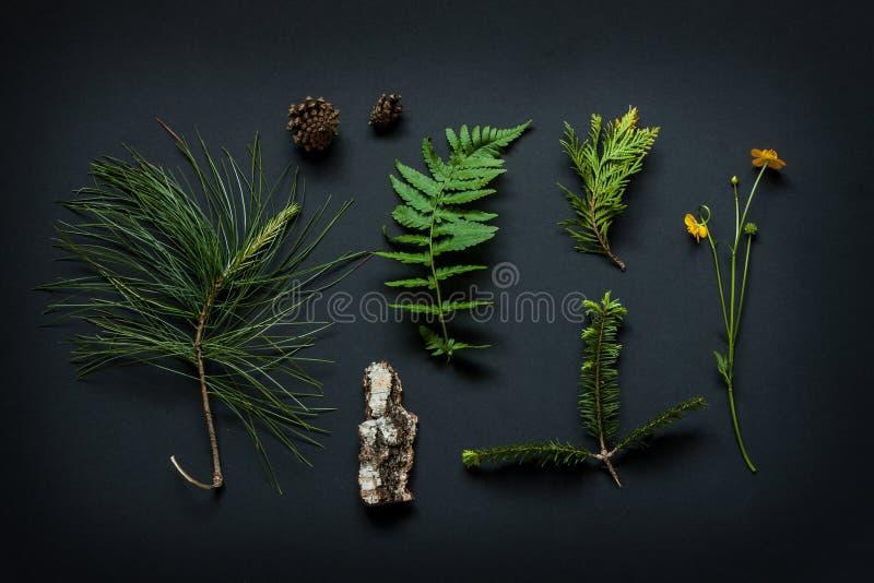 Detalles de la naturaleza - la corteza de árbol, los conos, la flor de la maravilla de pantano, las ramas de árbol de pino y el h imagen de archivo libre de regalías