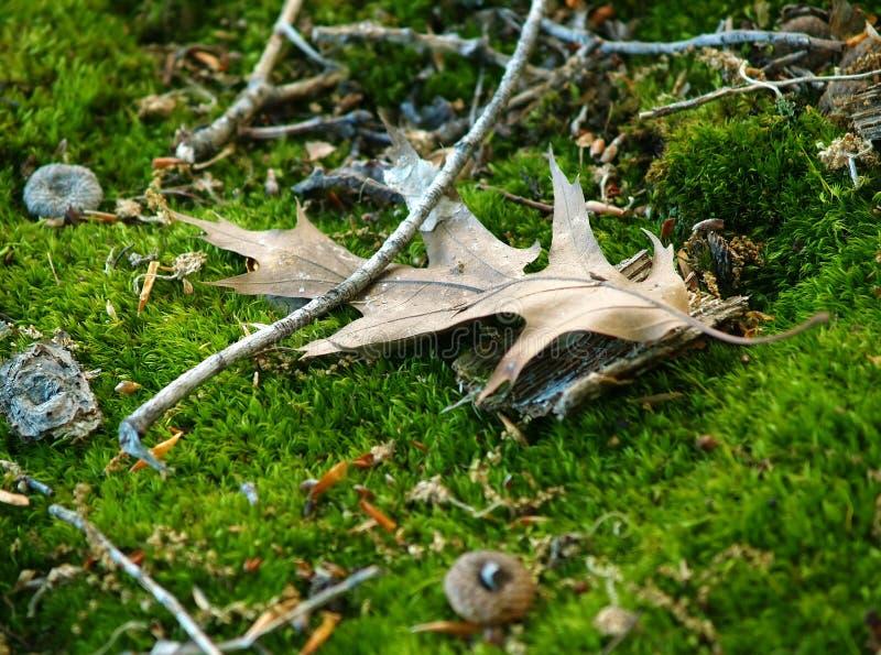 Detalles del suelo del bosque imágenes de archivo libres de regalías