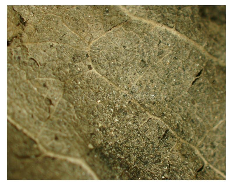 Detalles microscópicos de hojas secas abstractas fotografía de archivo