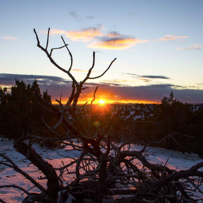 Determinación del sol del invierno que mira a escondidas a través del esqueleto extendido de un árbol muerto del pinon en el sudo fotografía de archivo libre de regalías