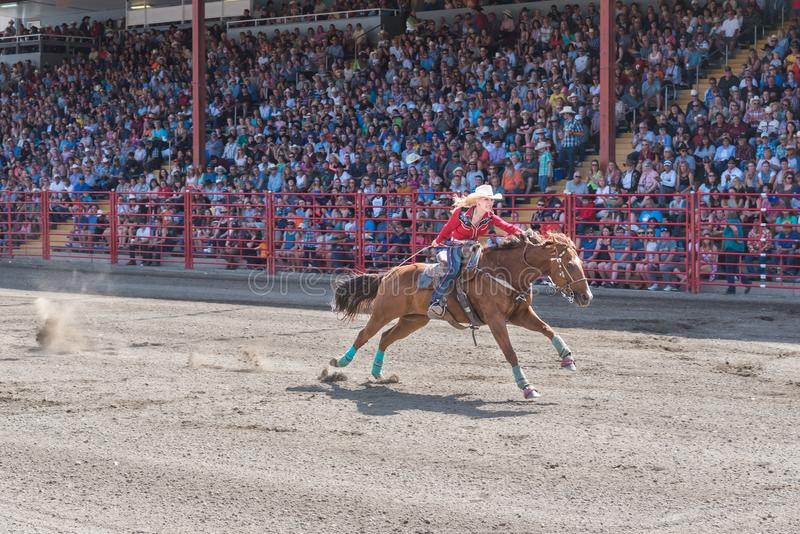 Determined woman pushes horse to finish line at barrel racing competition stock photos