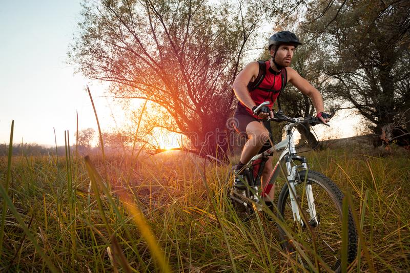 Determined young man riding mountain bike in a park royalty free stock photography