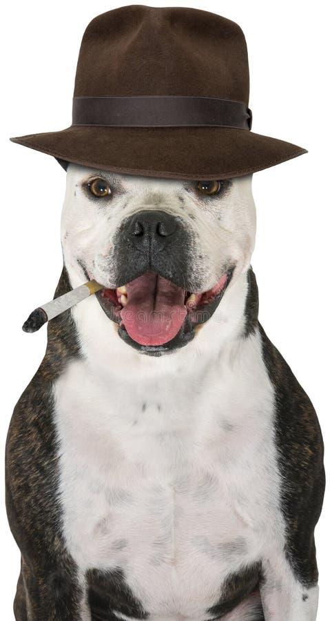 Detetive privado engraçado Dog, isolado fotografia de stock royalty free