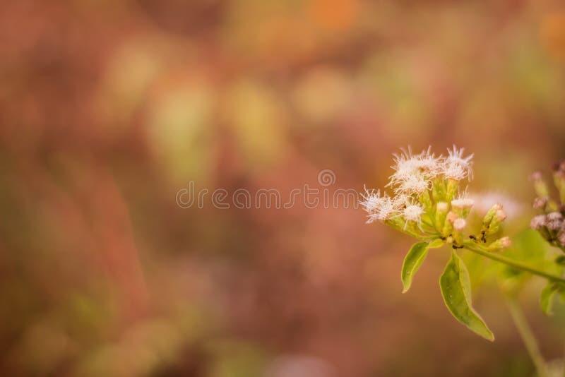 Detta är foto kaktuns royaltyfria bilder