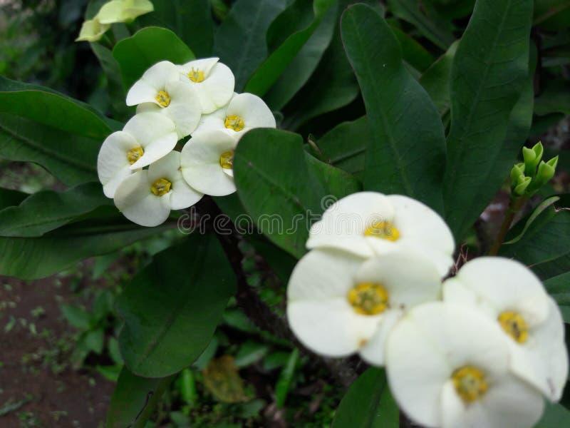 Detta är härliga blommor royaltyfria foton