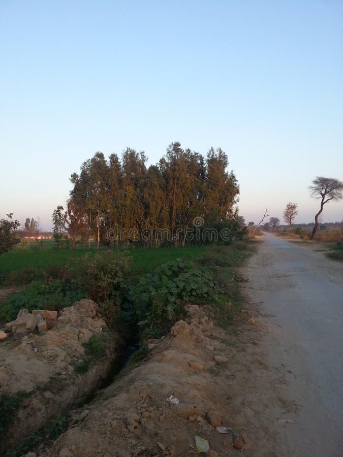 Detta är pakistanska härliga fält royaltyfri bild