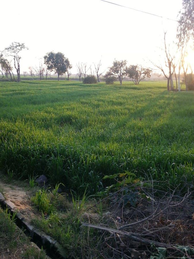 Detta är pakistanska härliga fält arkivfoto