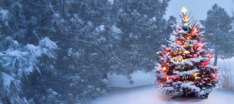 Detta träd glöder ljust på snö täckt dimmig julmorgon arkivbilder