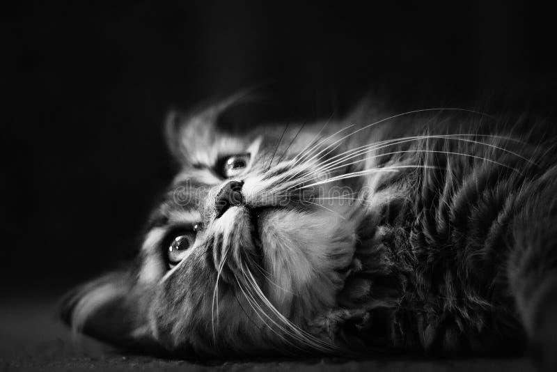 Dettagli degli animali fotografie stock libere da diritti
