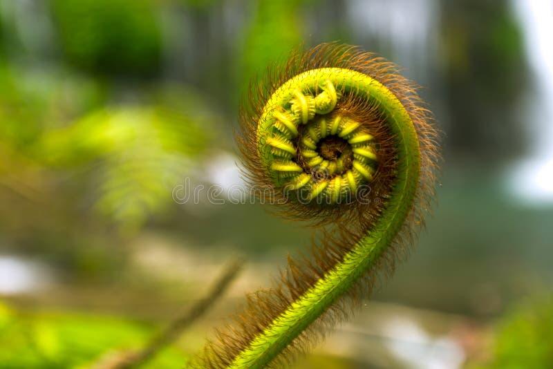 Dettagli della natura della felce e delle serie di Fibonacci fotografia stock libera da diritti