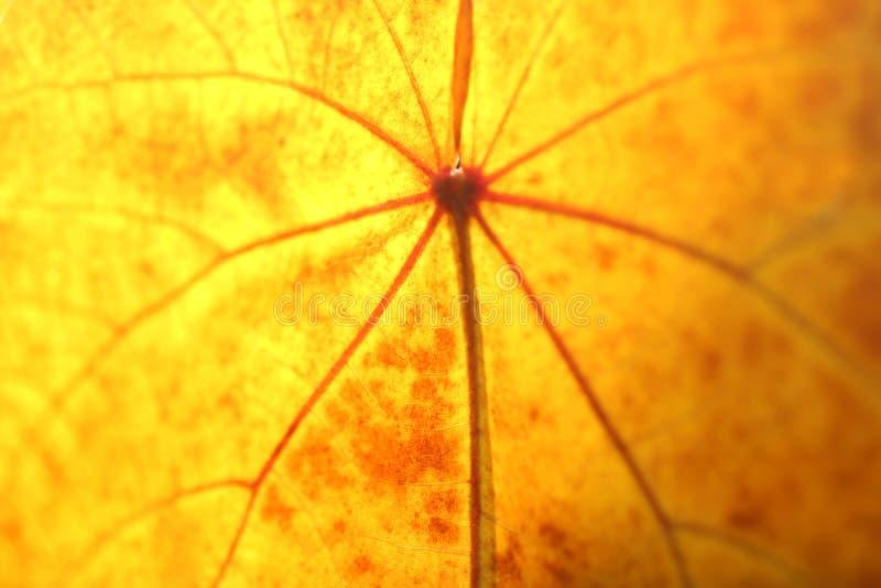 Dettagli dorati del fondo della foglia di autunno immagini stock