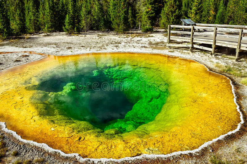 Dettagli la vista di ipomea geotermica dello stagno in Yellowstone NP fotografia stock