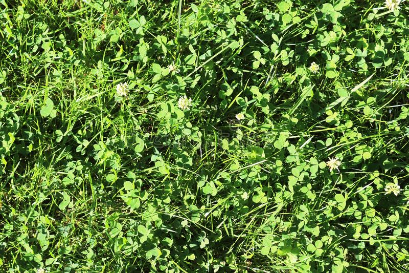Dettagliato vicino sulla vista sulle superfici dell'erba verde fotografie stock libere da diritti