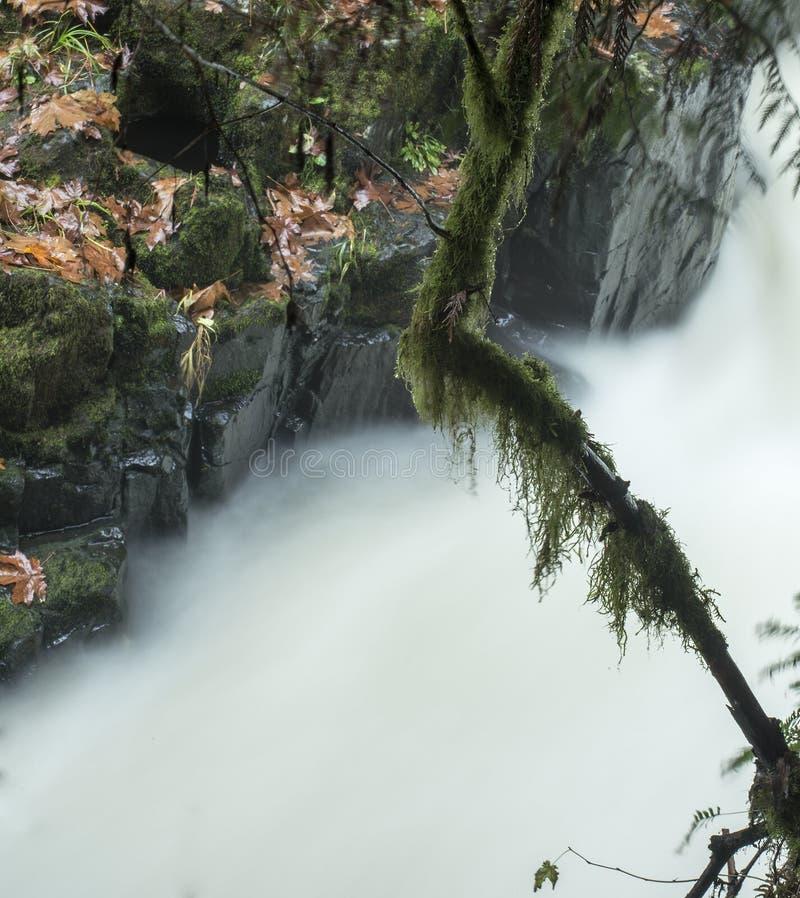 Dettaglio, Cedar Creek, fuori del terreno boscoso, Washington fotografia stock libera da diritti
