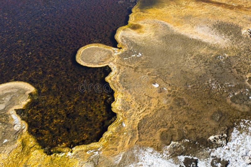 Dettaglio d'alghe della stuoia della sorgente di acqua calda di Yellowstone fotografie stock libere da diritti