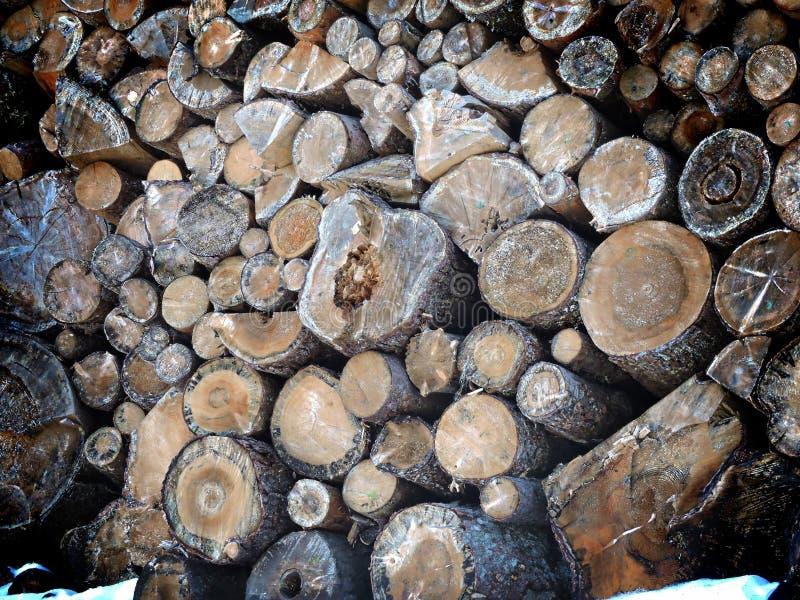 Dettaglio dalla foresta - mucchio dei tronchi di albero tagliati pronti per trasporto - legna da ardere fotografia stock