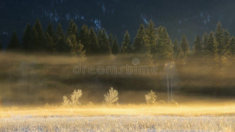 Dettaglio degli alberi forestali Scena bavarese congelata durante l'orario invernale Bello lago Barmsee, Germania fotografia stock