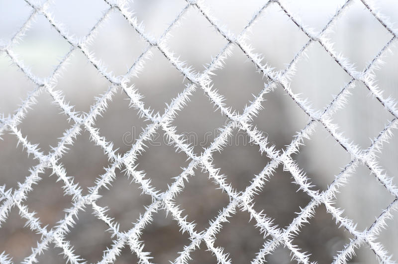 Dettaglio dei fiocchi di neve fotografie stock libere da diritti