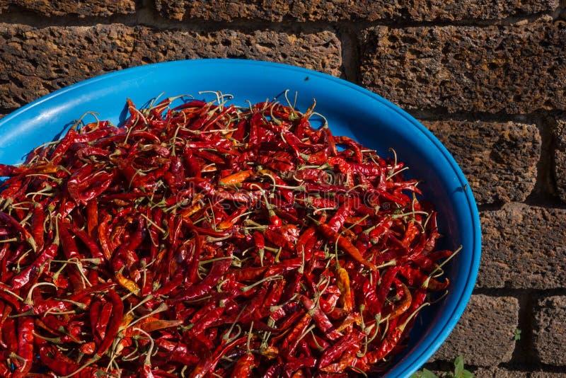 Dettaglio dei peperoni che si asciugano al sole in una via di Chiang Mai, Tailandia immagini stock