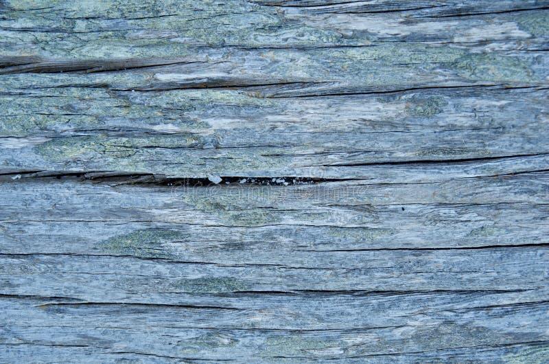 Dettaglio del ceppo grigio del legname galleggiante che mostra le crepe profonde e modello diritto buoni per fondo fotografie stock