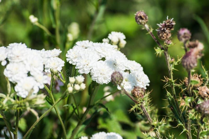 Dettaglio del fiore con i petali bianchi fotografie stock libere da diritti