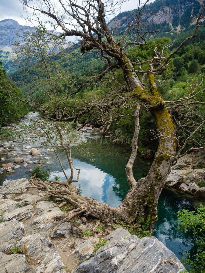 Dettaglio del fiume dell'ara in valle di Bujaruelo in Pirenei fotografie stock
