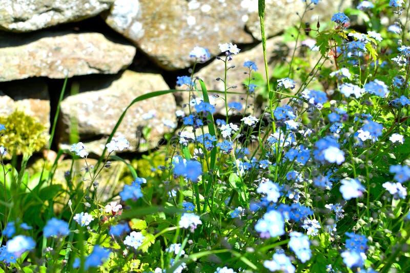 Download Dettaglio Del Giardino Del Cottage Immagine Stock - Immagine di fiore, petali: 55351795