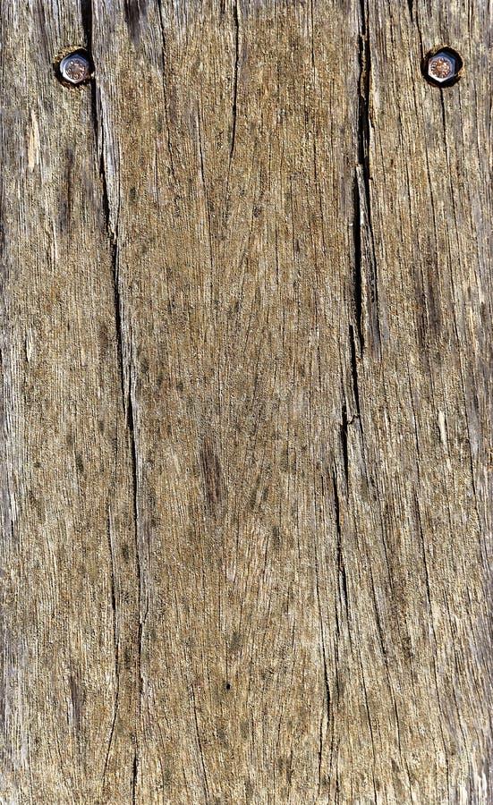 Dettaglio del pavimento di legno con due viti immagine stock