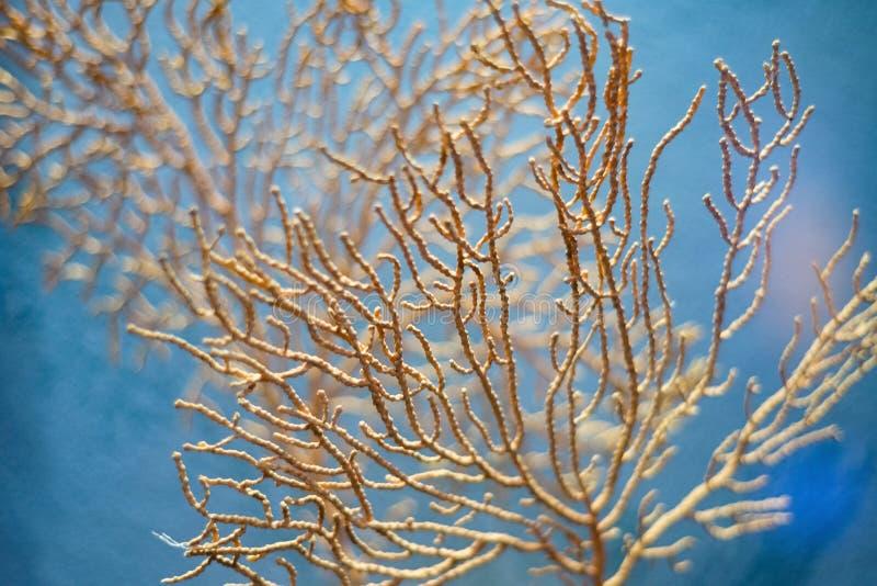 Dettaglio del primo piano di piano della barriera corallina dell'oceano fotografie stock