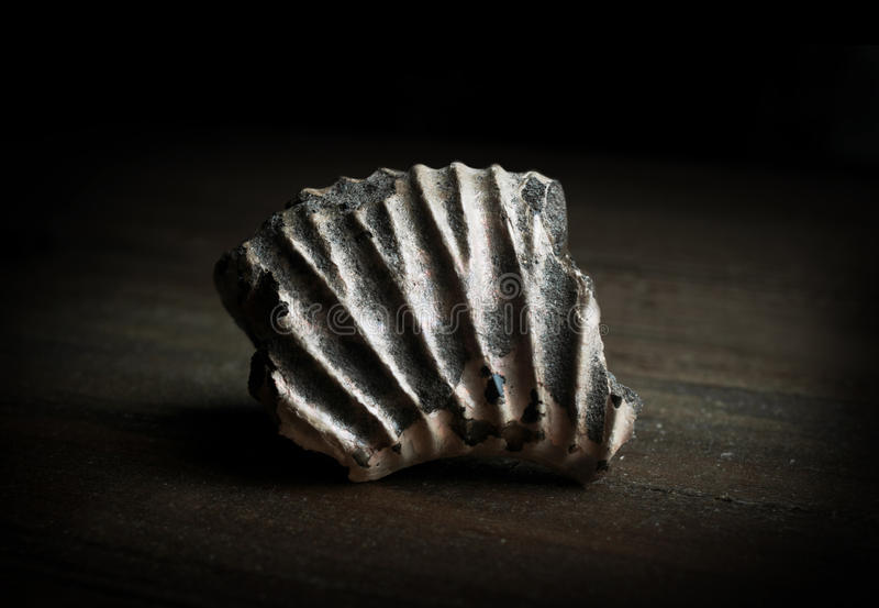 Dettaglio del primo piano di un fossile molto antico (più di 350 milioni immagini stock