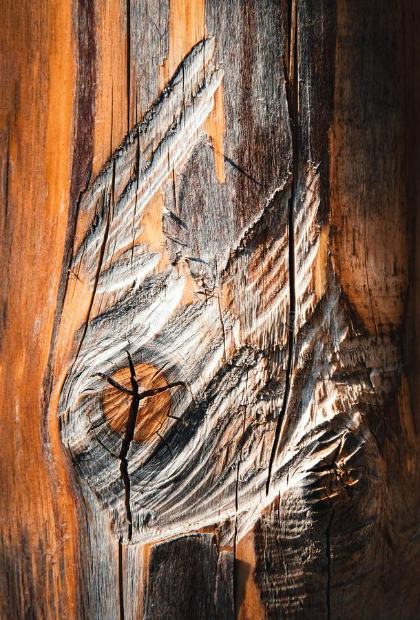 Dettaglio del tronco di albero senza corteccia fotografie stock libere da diritti