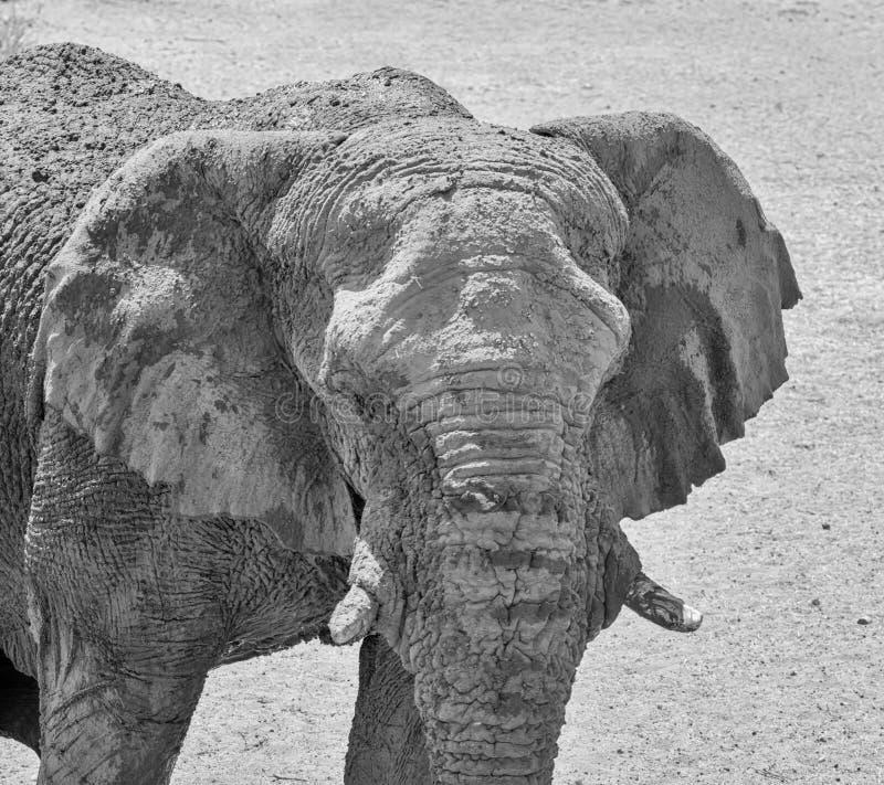 Dettaglio dell'elefante fotografie stock