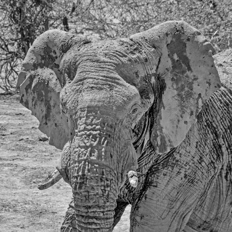 Dettaglio dell'elefante fotografia stock libera da diritti
