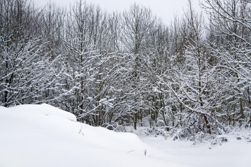 Download Dettaglio Della Foresta Di Snowy Immagine Stock - Immagine di neve, inverno: 30830451
