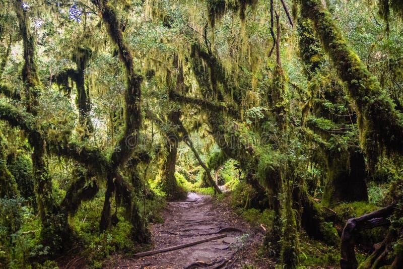 Dettaglio della foresta incantata in carretera australe, enca di Bosque immagini stock